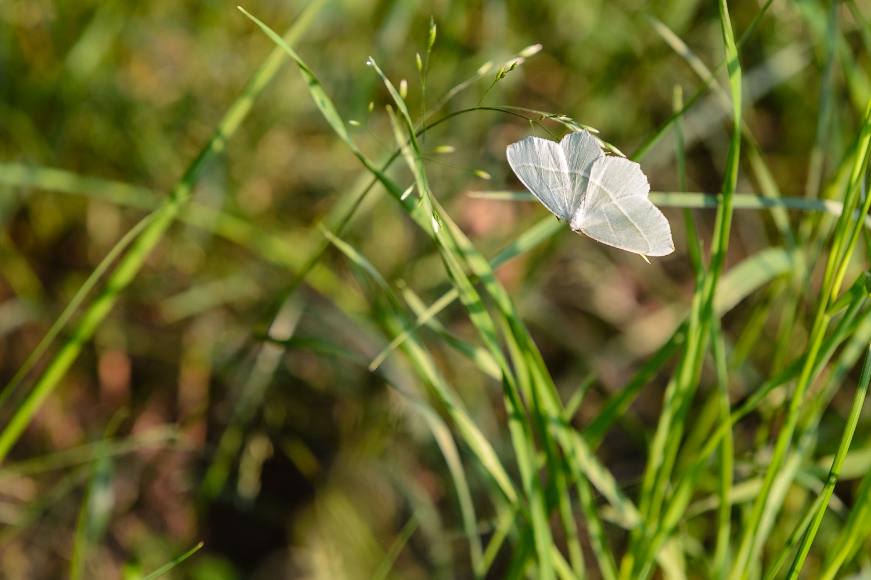 Schmetterling - Morgenspaziergang im Frohnsdorfer Wald