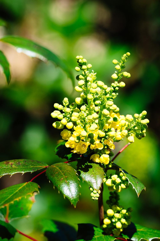 Blumenfoto - zu hohe Dynamik Unterschiede vermeiden, ohne Diffusor
