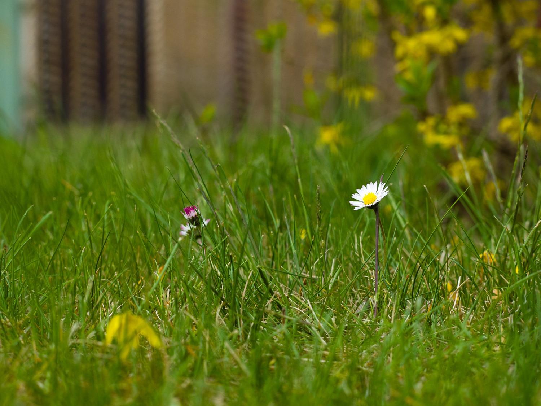 Wie fotografiere ich Blumen - Brennweite 40mm, (Foto copyright - Frank Weber - Berlin - fotologbuch.de)