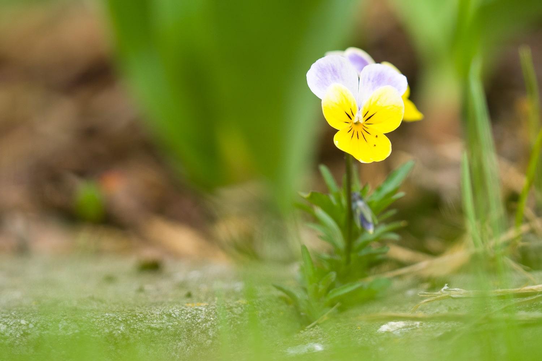 Wie fotografiere ich Blumen - normal belichtet, (Foto copyright - Frank Weber - Berlin - fotologbuch.de)