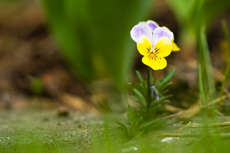 Wie fotografiere ich Blumen - eine Blende unterbelichtet, (Foto copyright - Frank Weber - Berlin - fotologbuch.de)
