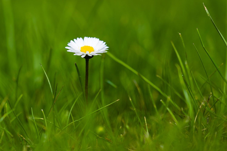 Wie fotografiere ich Blumen - Blickwinkel liegend, (Foto copyright - Frank Weber - Berlin - fotologbuch.de)
