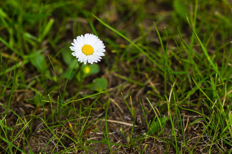 Wie fotografiere ich Blumen - Blickwinkel von oben, (Foto copyright - Frank Weber - Berlin - fotologbuch.de)