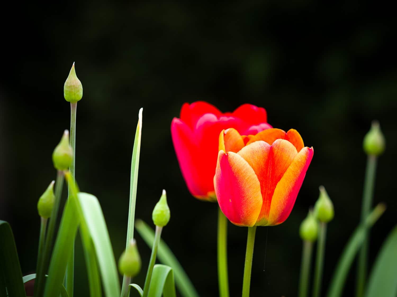 Wie fotografiere ich Blumen - zu weit weg, (Foto copyright - Frank Weber - Berlin - fotologbuch.de)