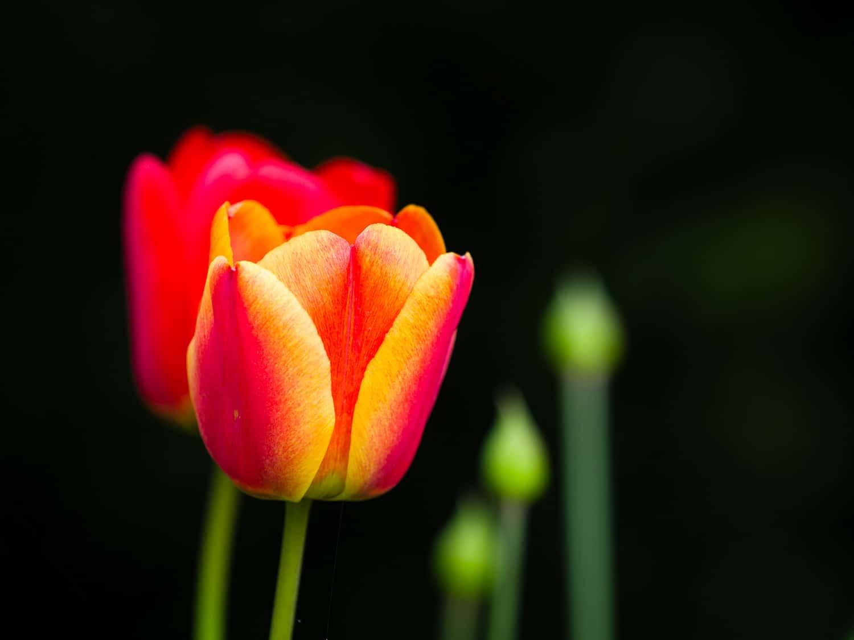 Wie fotografiere ich Blumen - nah ran, (Foto copyright - Frank Weber - Berlin - fotologbuch.de)