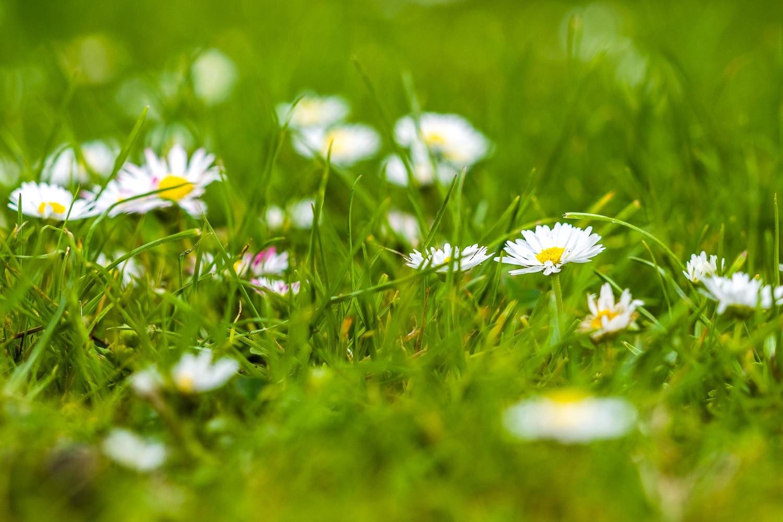 Wie fotografiere ich Blumen - zu viele Hauptmotive, (Foto copyright - Frank Weber - Berlin - fotologbuch.de)