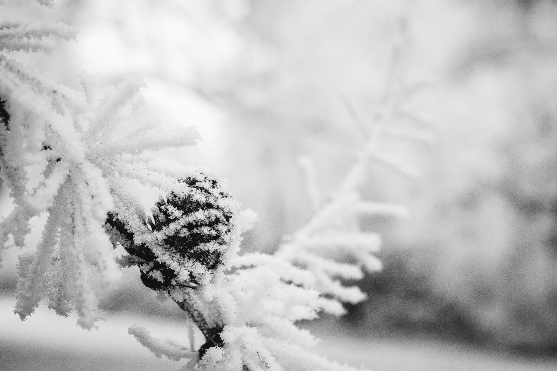 Fotos im Schnee - Die Belichtungskorrektur richtig nutzen, (Foto copyright - Frank Weber - Berlin - fotologbuch.de)