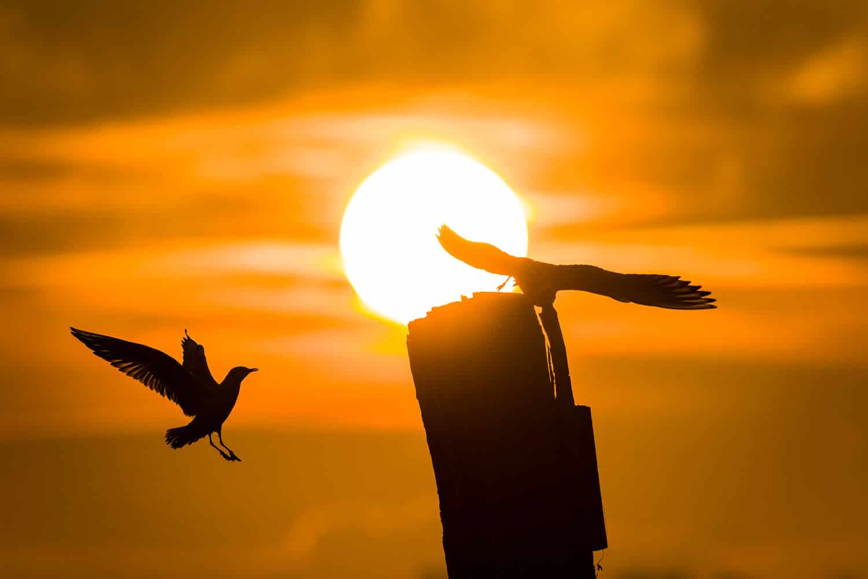 Möwen in der aufgehenden Sonne, (Foto copyright - Frank Weber - Berlin - fotologbuch.de)
