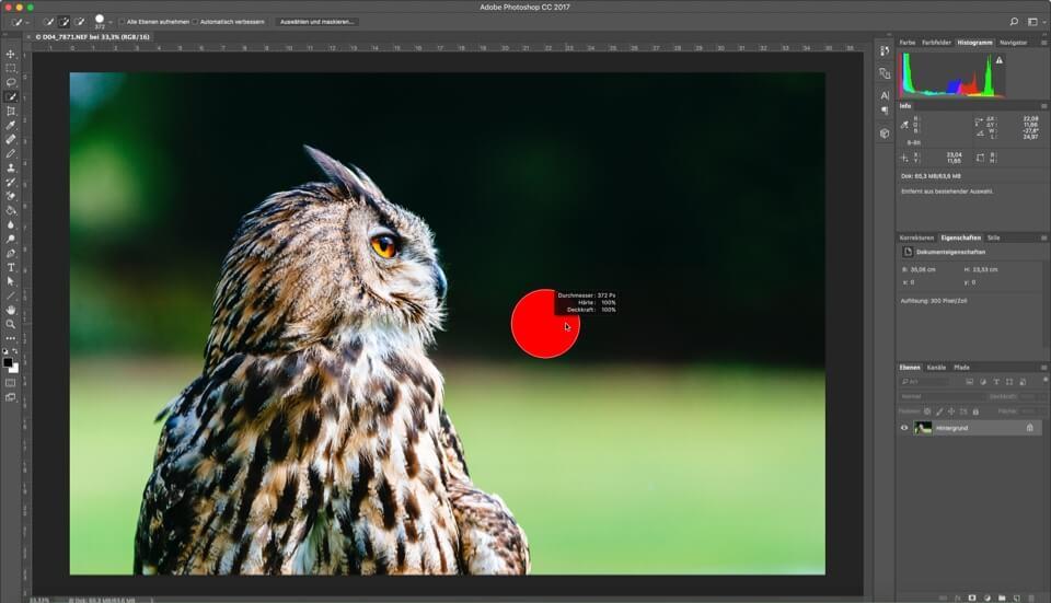 Photoshop - Quicktipp - Bildauschnitt zoomen und verschieben - Pinselgröße ändern, (Foto copyright - Frank Weber - Berlin - fotologbuch.de)