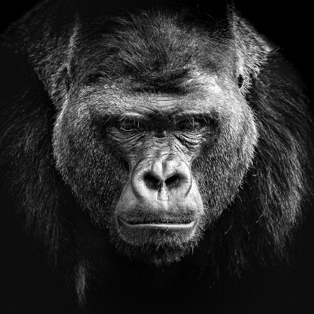 Die Affenbande unterwegs - ein paar Fotos von Affen, (Foto copyright - Frank Weber - Berlin - fotologbuch.de)