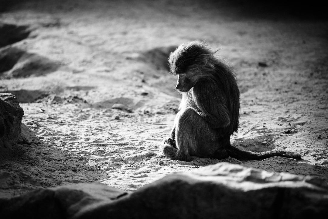Die Affenbande unterwegs – ein paar Fotos von Affen