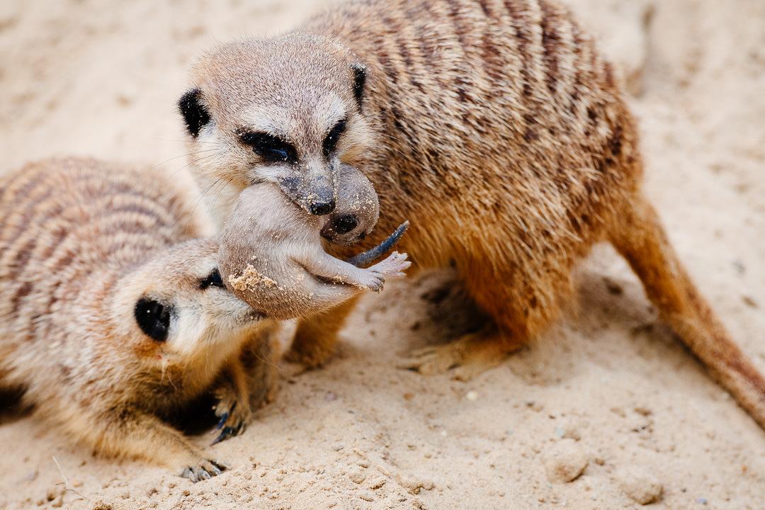 Tiere fotografiert im Zoo Berlin und im heimischen Garten – Teil 02