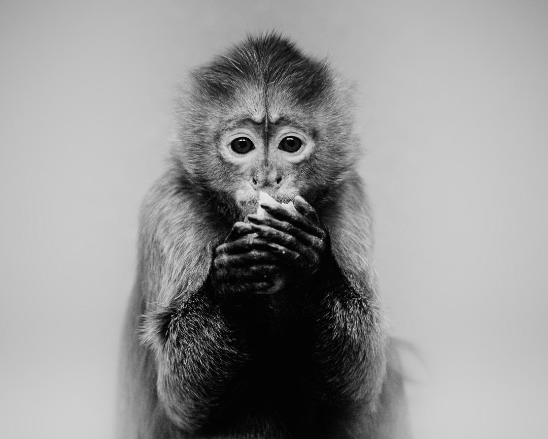 In Gedanken versunken? – Kleines Äffchen Portrait in schwarzweiß