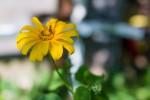 Testfoto Nikon AF-S 24mm /1.4, (Foto copyright - Frank Weber - Berlin - www.fotologbuch.de)