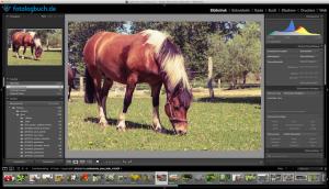 Lightroom Video Tutorial – Bildinformationen einstellen und einblenden