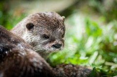 Buchen Sie einen Fotokurs in Berlin Thema Tierfotografie