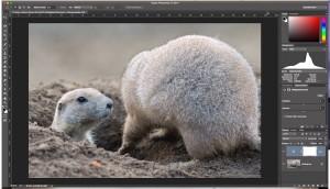 Photoshop – Histogramm und Korrektur Helligkeit und Kontrast