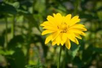 Fototipp – Blumenfoto in der Sonne oder im Schatten