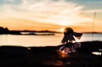 Urlaub – Fotos Paddeln in den Schären von Schweden – Teil 2