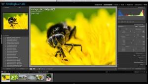 Lightroom Video Tutorial – Beschnitt auf Pixel direkt – Folge 24 von X