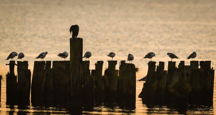 Schlafende Vögel auf den Buhnen, (Foto copyright - Frank Weber - Berlin - fotologbuch.de)