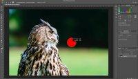 Photoshop – Quicktipp – Bildauschnitt zoomen und verschieben – Pinselgröße ändern